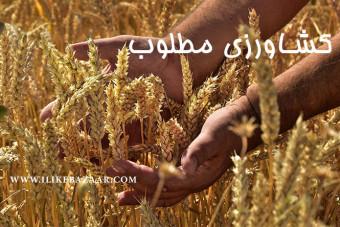 عواملی که در تکثیر محصولات کشاورزی تأثیر می گذارد