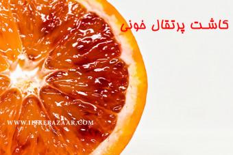 روش کاشت پرتقال خونی در گلدان