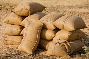 تجارت در بازار واردات و صادرات برنج چگونه است