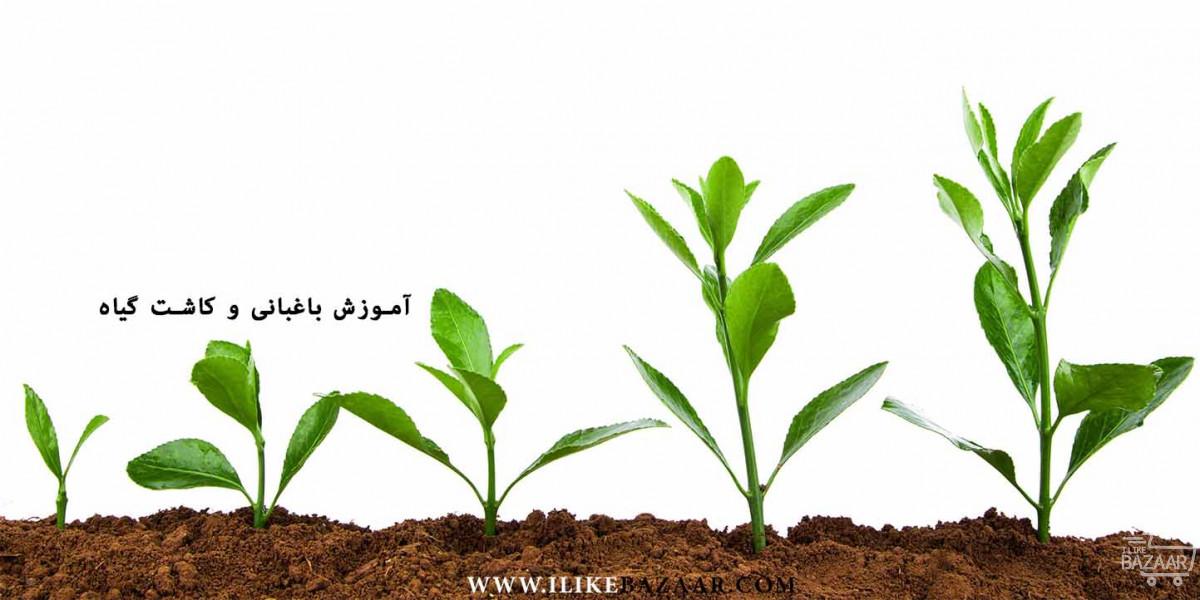تصویر شماره آموزش کاشت گیاه چگونه گیاه بکاریم