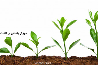 آموزش کاشت گیاه چگونه گیاه بکاریم